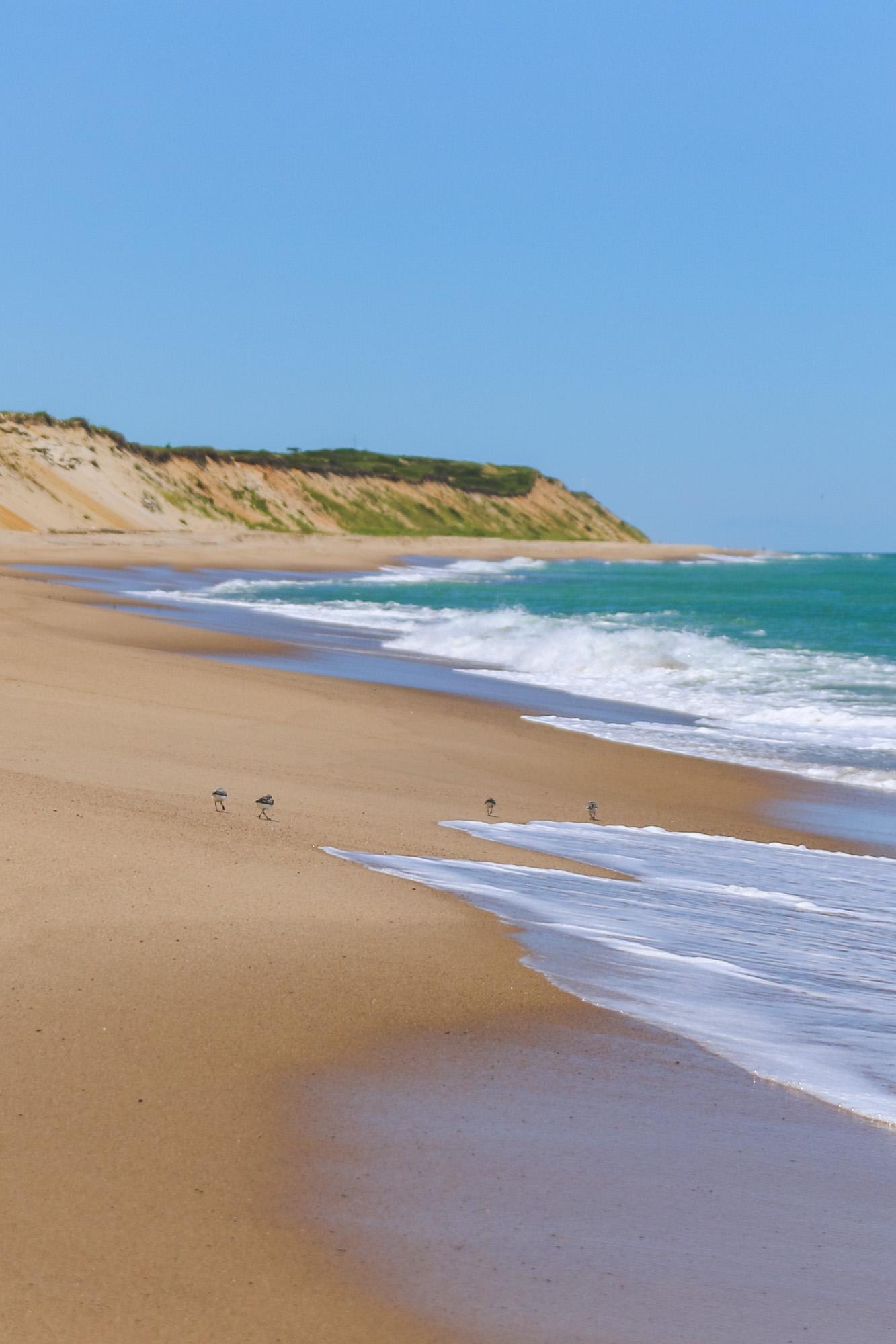 Socially Distanced Beach Day Essentials